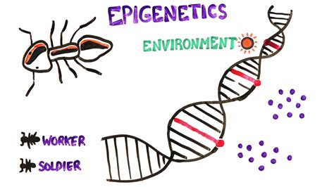 Gay gene no scientific evidence for it jpg 1920x1080